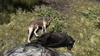 example of Automatic Variants - wolves