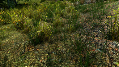 Unique Grass no ENB with Vanilla Lighting and small saturation boost - image by SparrowPrince