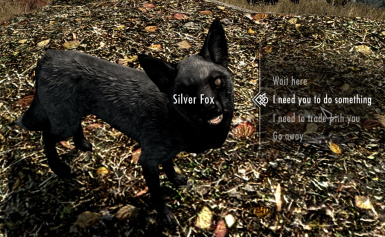 Follower Silver Fox