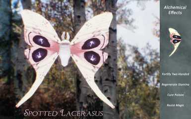 Spotted Lacerasus