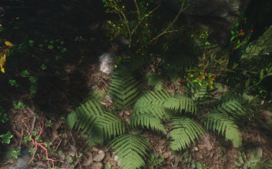 whiterun ground ferns