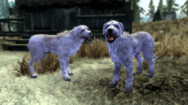 All The Named Dogs In Skyrim