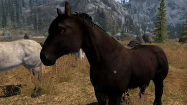 Black Fell Pony
