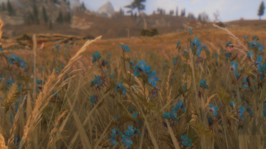 Whiterun Wildflowers