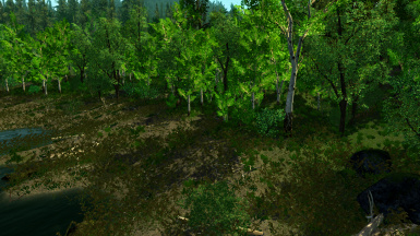 Conifer Forest 1