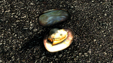 Clam shell with Clam meat inside Vanilla size