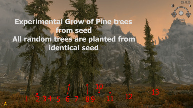 trees from seed