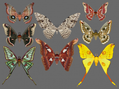 New Moths