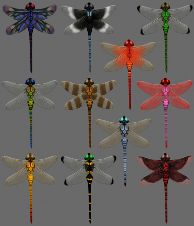 New Dragonflies
