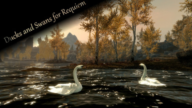 Requiem patch for Ducks and Swans