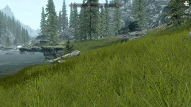 Skyrim Dense Grass Project