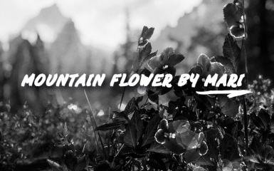 Mountain flower by Mari