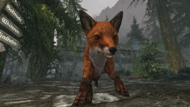 Real Eyed Normal Fox Retexture