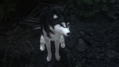 Saphir with Husky HD Recolor (Black)