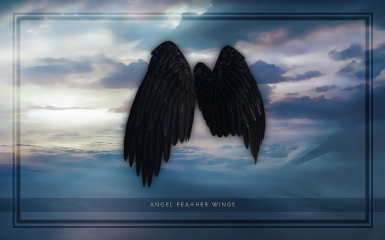 Angel Feather Wings   Black