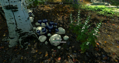 Wiseman303's Flora Fixes for Beyond Skyrim