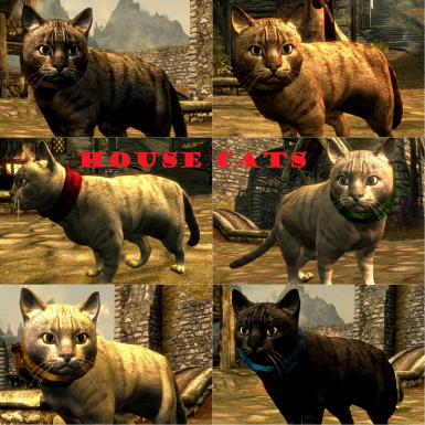 6 House Cats