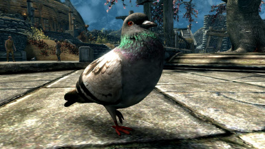 Pigeons- Elements of Skyrim pt.12 (mihail immersive add-ons- birds)