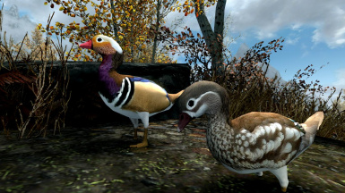 Pheasants Ducks and Chickens- Elements of Skyrim pt.13 (mihail immersive add-ons- animal- birds)