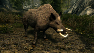 Boars and Daggerbacks- Mihail Monsters and Animals (mihail immersive add-ons- oblivion- eso)
