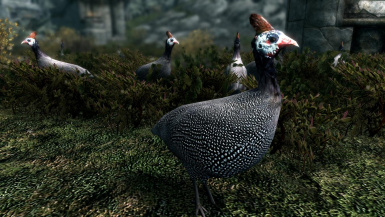 Geese and Hammerfell Fowls- Elements of Skyrim pt.15 (mihail immersive add-ons- birds)