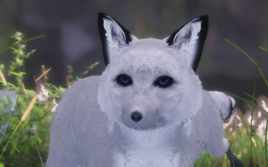 arctic fox cute eyes FUSAFUSA ver!
