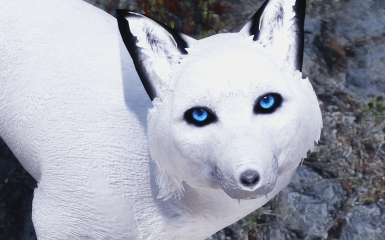 arctic fox realistic eyes