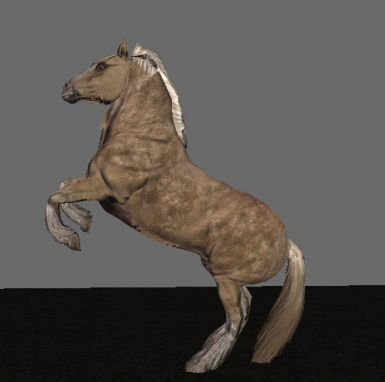 The Fjord Horse that would make any Nord proud!
