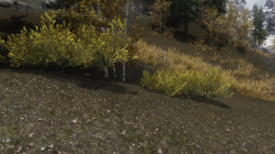 random yellow shrubs before fix
