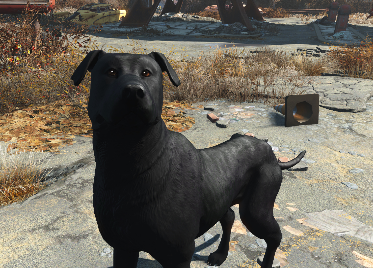 Labrador Dogmeat at Fallout 4 Nexus - Mods and community