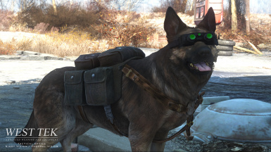 v1-1 Dogmeat tactical doggles