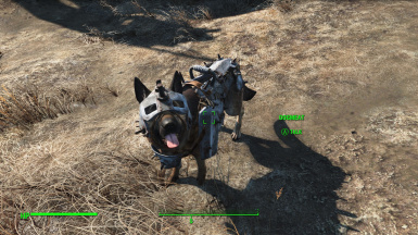 Simply Useful Dog Armor