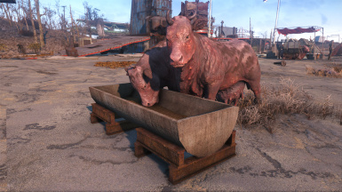 Real Troughs - New Brahmin Feeders (standalone)