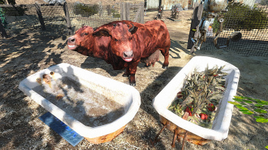 Better Brahmin's Troughs