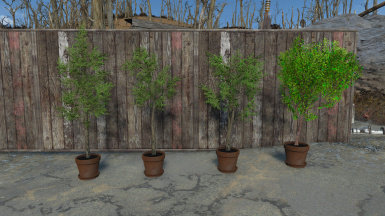 12 Potted Trees