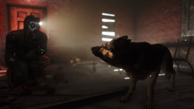 Jealous Dogmeat