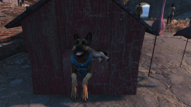 Dogmeat House