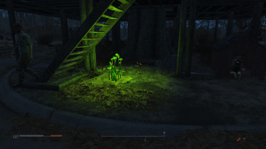 Glowing fungus comes to life