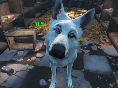 Ghost- White Dogmeat