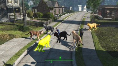 Driveables of the Commonwealth - Cats
