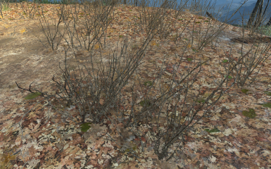BEFORE! (In front of the shack at Tenpines Bluff. TWIGS! EW!)