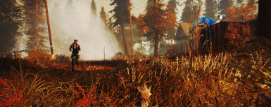 BNS + Commonwealth Conifers + Misty Pines