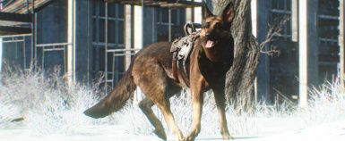 Dogmeat fun in the snow
