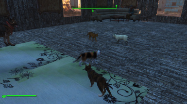 More cats And a confused dog