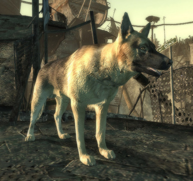 newdogmeat3
