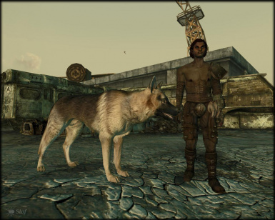 dogmeat2