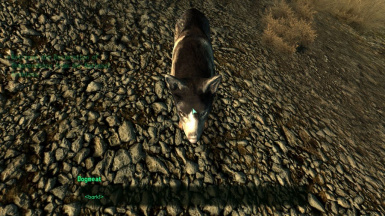 Dogmeat - Before