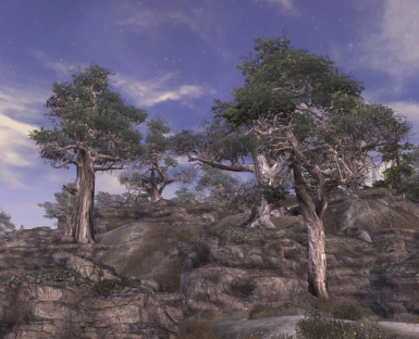Pines in Fertile Wasteland v21