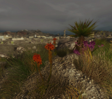 A Wasteland in Bloom