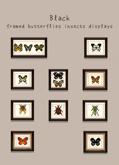 black framed butterflies insect display